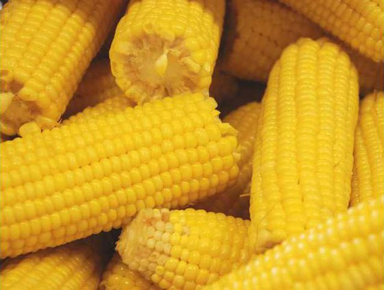 corn Web