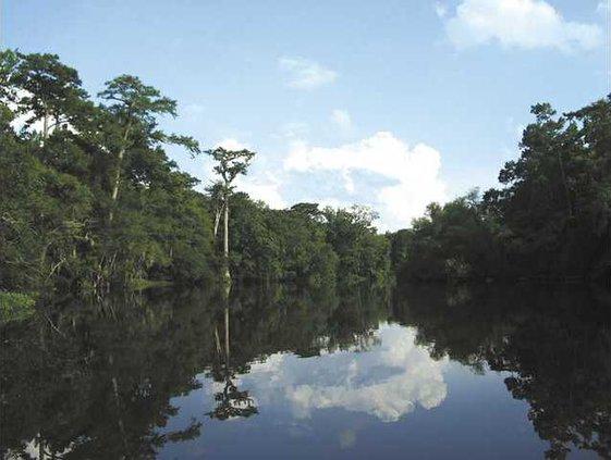 Ogeechee River for Web
