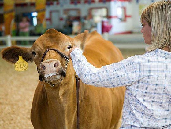 W livestock-show1