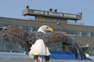 eagle at Paulson