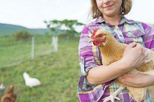 overthinking chicken
